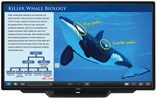 Sharp PN-L803C Aquos Board - Interactive Display System